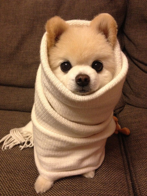 Achoo: How To Prevent Your Dog From Getting The Flu!