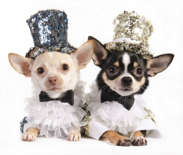 Anthony Rubio's One of A Exquisite Dog Fashion To Make Your Pet Look Like A Star.  Photo www.strikingpaws.com