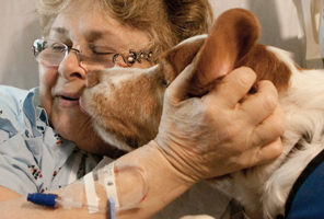 Pet-Therapy-dog-in-hospital-thumb