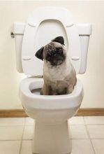 funny dog toilet