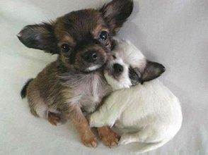 dogs hugging cute