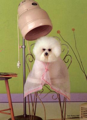 funny groomed dog