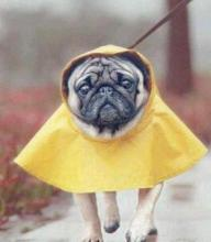 Rain dog cute raincoat