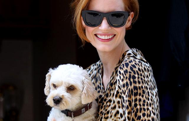 Jessica Chastain Could Win Top Dog Oscar Tonight!