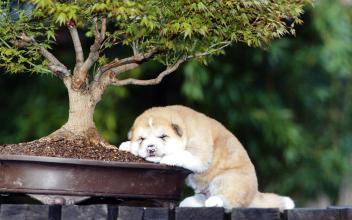 feng shui bonsai dog cute