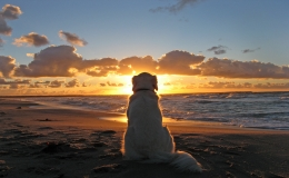 cute dog sun beach sunrise sunset