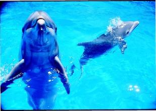 AF PG 84 two dolphins