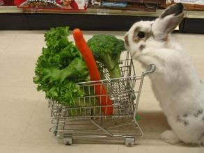funny easter bunny photo