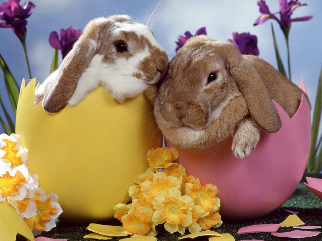 Why Does The Easter Bunny Bring Eggs? | Animal Fair | Wendy ...