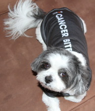 Baby Hope in the chic black doggie T in honor of her beloved sister, Lucky!