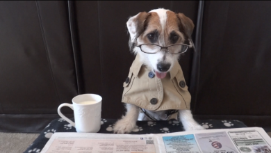 Jesse the Jack Russel increased his fame on the Late Show!