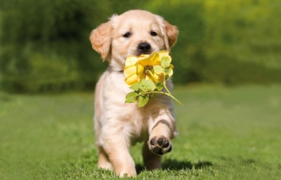 cute puppy running spring dog