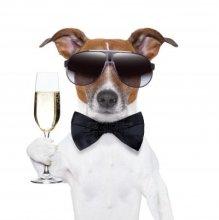 dog champagne
