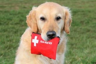 emergency_dog