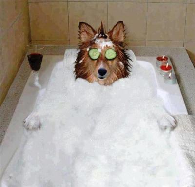 dog spa funny bath groom