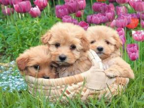 cute spring dog puppy