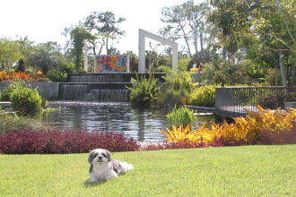 The Naples Botanical Gardens hold a yearly Dog Day