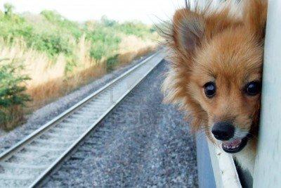 cute dog train window