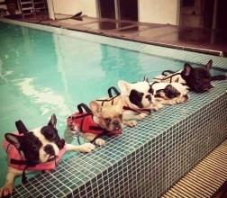 pool dog funny beach