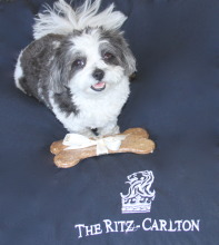 Dogs are Very Important Pets at the Ritz Cartlon!