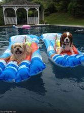 funny dogs pool
