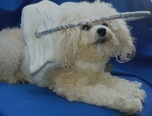 Muffin's Halo: An Heaven Sent Device For Blind Dogs!