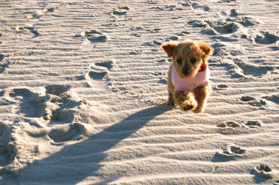 beach-beautiful-cute-cutie-dog-Favim.com-142600