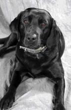 catie copley dog fairmont copley plaza