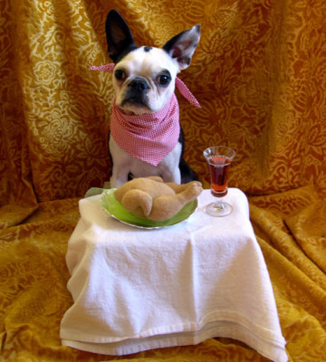 """Dogs have a different definition for """"yummy""""!"""