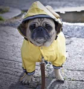 dog-rain.jpg