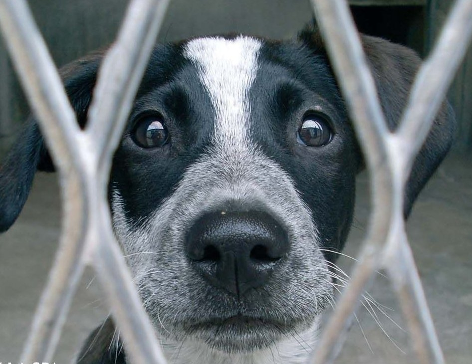 Animal Haven, A Safe Place For Homeless Pets In The Heart Of Manhattan!