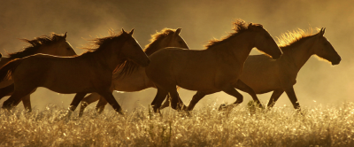 herd-run-sun