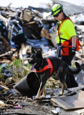 Thank you to the search and rescue dogs!