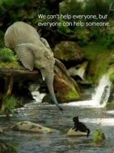 adorable animal elephant cute cat