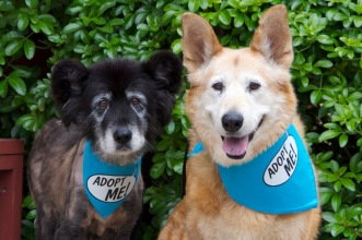 Senior canines smile for The Grey Muzzle Organization.