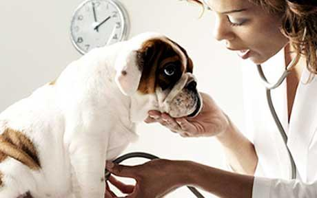 "Vaccinating Your Pet: How ""Safe"" Is Too Safe?"