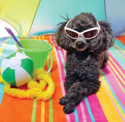 Take your pet with to Atlantic City!