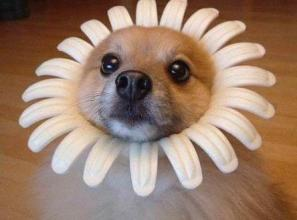 dog-daisy cute summer