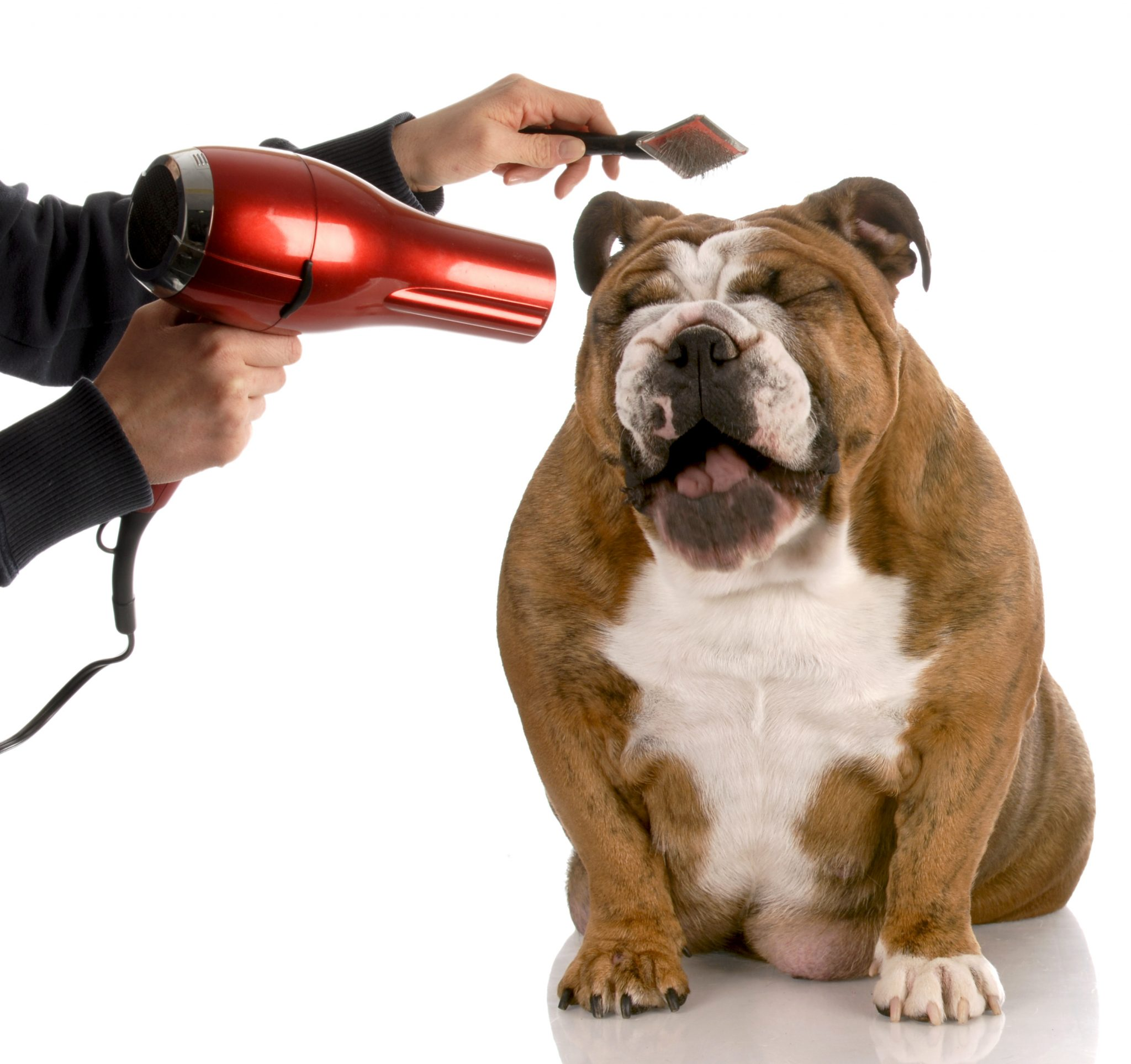 Best Vacuum For Pet Hair