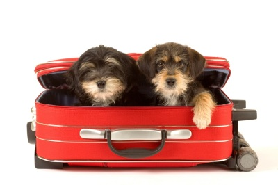 dogs in suitcase