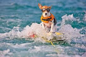funny dog surf