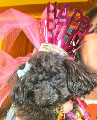 The birthday girl - Pupi Dupi!