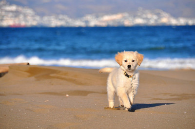 dog cute beach ocean