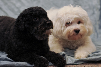 Gidget and Cosmo