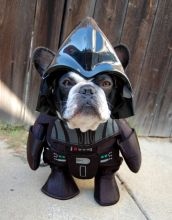 star wars darth vader pet costume black dog puppy
