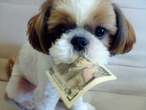 dog money cute