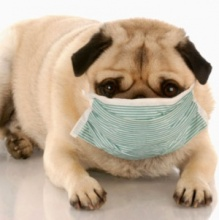 pet-allergy-myths-1