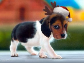 Christmas-Puppy-Wearing-Santa-Hat-and-Reindeer-Antlers