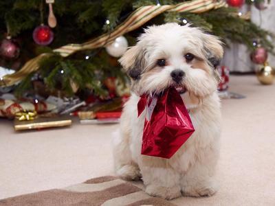 bag-cute-dog-little-bag-love-Favim.com-328573