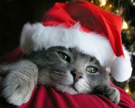 christmas cat holiday